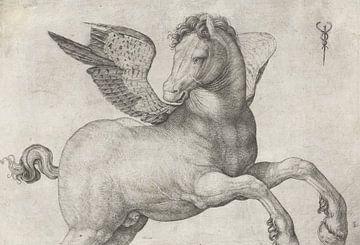 Pegasus, Jacopo de'Barbari