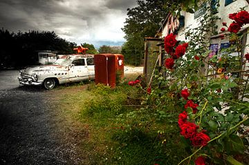 Red roses von Sonja Pixels