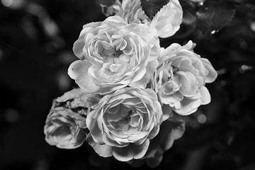 Roses en noir et blanc sur Gerard de Zwaan