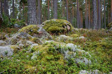Schweden 277 von Geertjan Plooijer