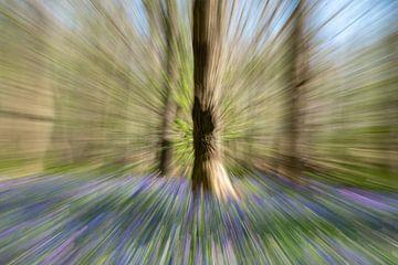 boom tussen boshyacinten van Ed Klungers