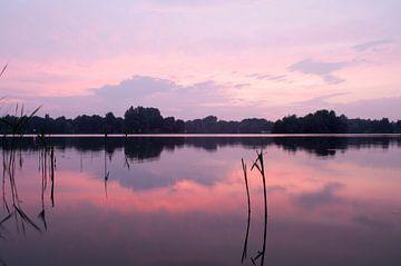 The Song of Purple Summer von Corina de Kiviet