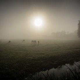 Koeien in de mist sur Marco Bakker