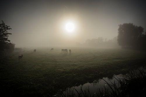 Koeien in de mist sur