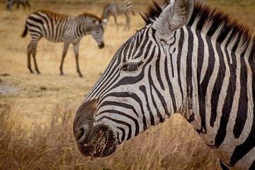 Zebra van Julian Buijzen