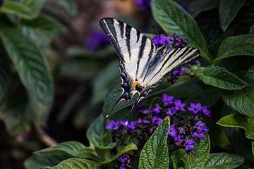 Schmetterling auf Blumen von Joyce Schouten
