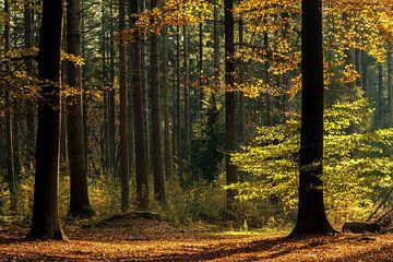 Herbstliche Farben im Speulerwald von Ilya Korzelius