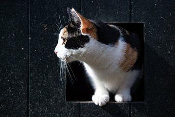Kat op uitkijk van Irene Lantman