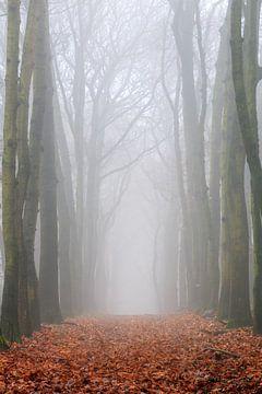 Verticale boslaan in de mist van Dennis van de Water