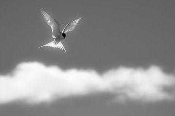 Engelen boven de wolken van Daniela Beyer