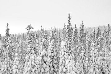 Verschneite Nadelbäume: Schwarz-Weiß oder Farbe? von Reis Genie