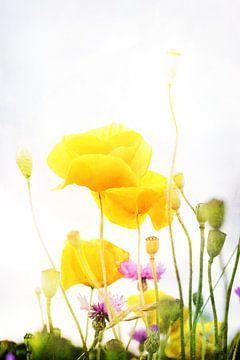 Gelbe Mohnblumen van Markus Wegner