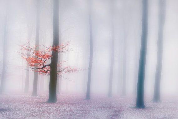 Mistig bos van Joost Lagerweij
