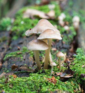 mushroom macro von Compuinfoto .