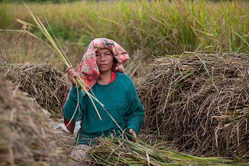 Reiskörner ausrollen von Kees van Dun