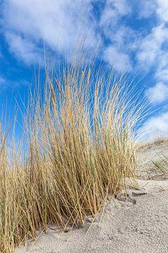 Dünen und Strandgras an der Ostsee von Christian Müringer