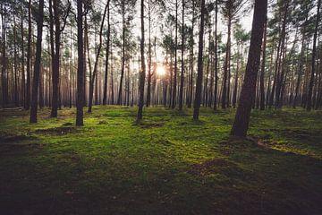 Zonsondergang in het bos van Skyze Photography by André Stein
