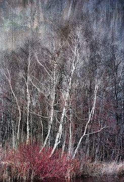 Birken-Bäume im Winter von Rietje Bulthuis