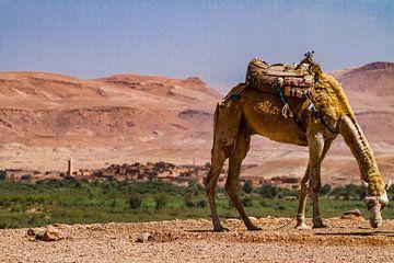 Kameel in Hoge Atlas, Marokko van Easycopters