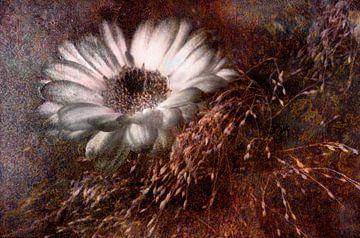 Margerite  und Gras Antik von Claudia Gründler