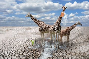 Giraffes van Jeannette Penris