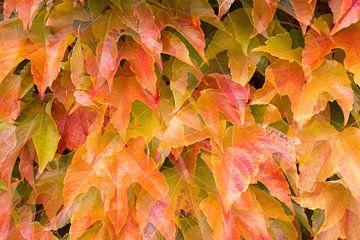 Herfstbladeren von Antwan Janssen