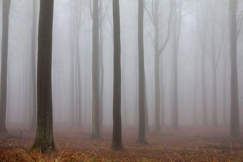 Mistig bos von