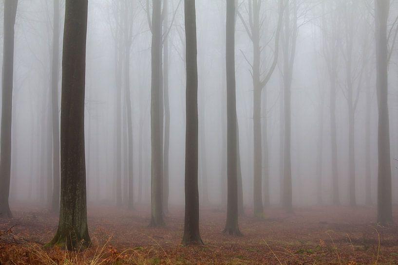 Mistig bos van Bart Ceuppens