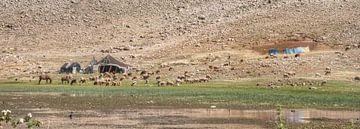 Atlas Shepherds sur BL Photography