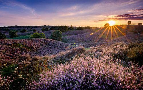 Zonsondergang bloeiende heide van