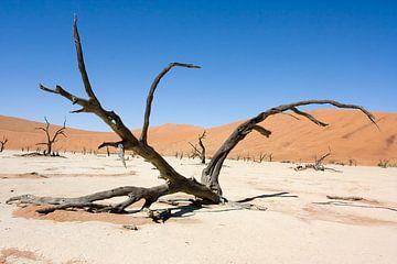 Dead Vlei, Namibia von Angelika Stern