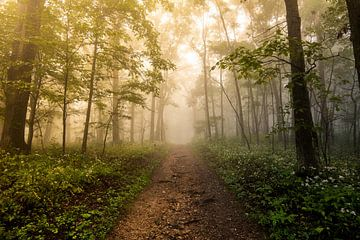 Bos Weg Foggy Woods, Nature Magick  van PI Creative Art