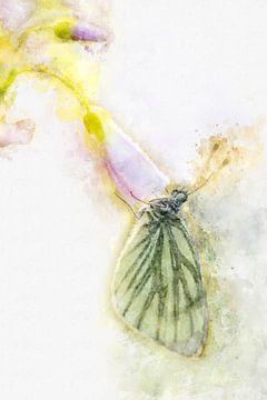 Papillon 4 sur Silvia Creemers