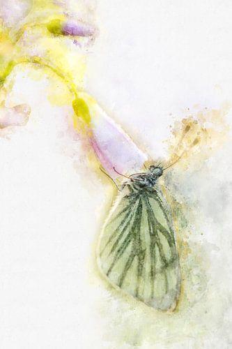 Vlinder 4 van