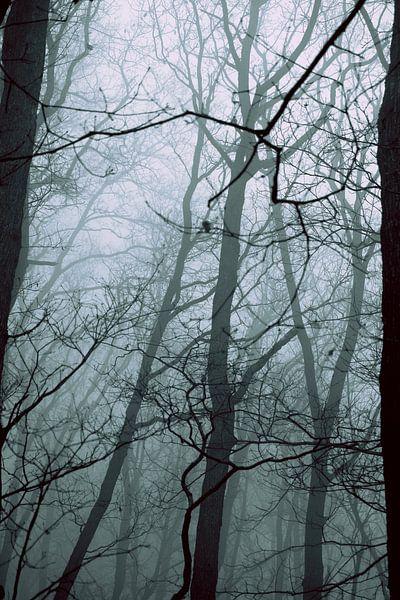 Branches van Forestia Arts