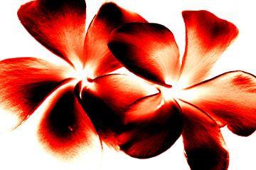 Red Twins von Ernst van Voorst