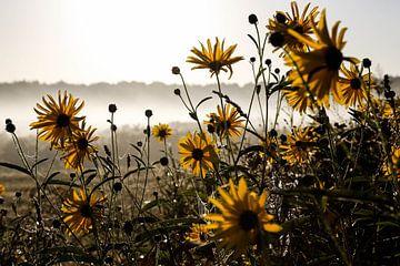 Blumen im Morgentau von Bliek Fotografie