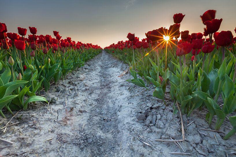Sunset at Zijldijk sur Ron Buist