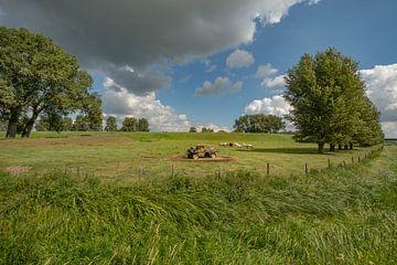 Hollandse koeien bij  (hooi) strowagen in de polder van Moetwil en van Dijk - Fotografie