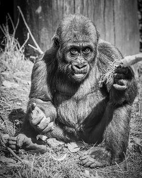 Gorilla jong van kees spel