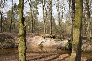 Meanderende Oostrumsche Beek slingert door landgoed Geijsteren van Ger Beekes