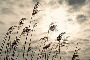Het zwanenwater, riet von Wendy Tellier - Vastenhouw