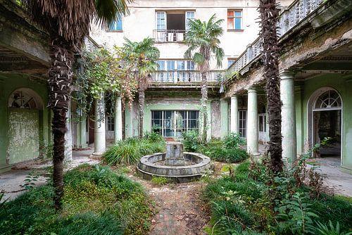 Verlassener Garten mit Palmen. von