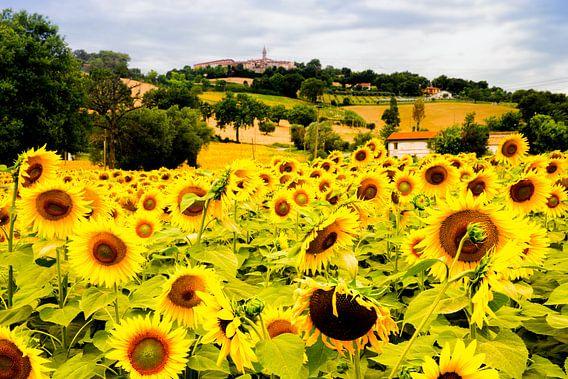 veld met zonnebloemen in Italie van Paul Piebinga