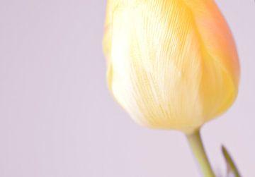 Tulpe von Manon Sloetjes