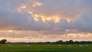 Moutons au coucher du soleil