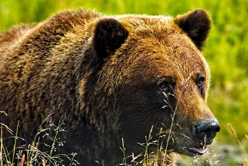 bruine beer van Eric van den Berg