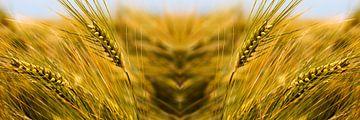 graanmonster van Arno Photo