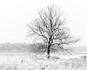 Ein einsamer Baum in einer Winterlandschaft.