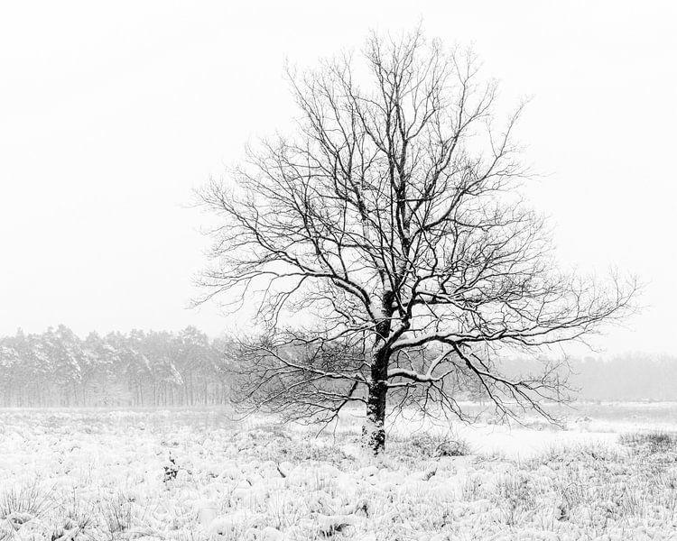 Ein einsamer Baum in einer Winterlandschaft. von Henk Van Nunen Fotografie